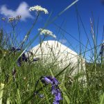 Nestled in nature – surrounded by wildflowers