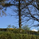 Crocullia is set up above our vegetable garden