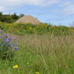 Knockalla yurt with wildflowers