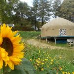 Mulroy yurt surrounded by cheery flowers