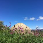 Knockalla yurt in spring time