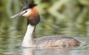 Birdwatching – Donegal
