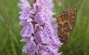 Wildflower / Botanical